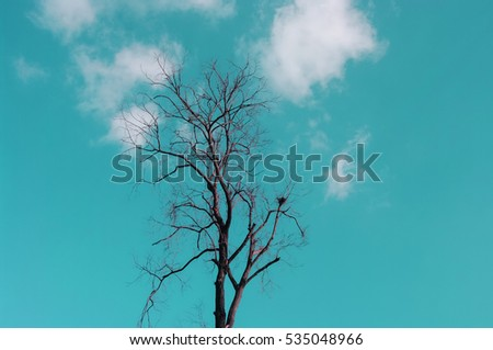 Dried tree with clouds in sky background, Vintage color style