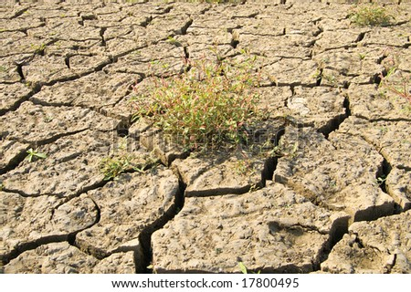 dried-up earth after a flood