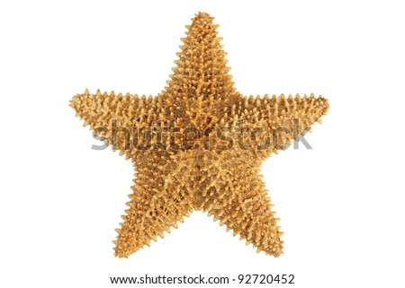 Dried yellow-orange starfish on a white background - stock photo