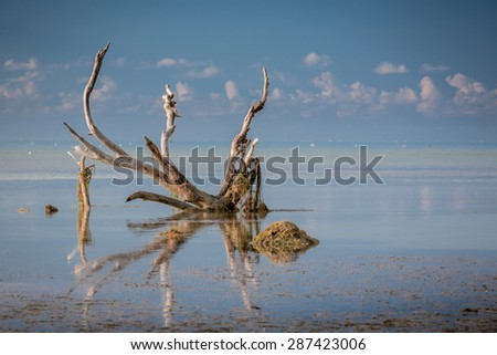 Driftwood in the keys - stock photo