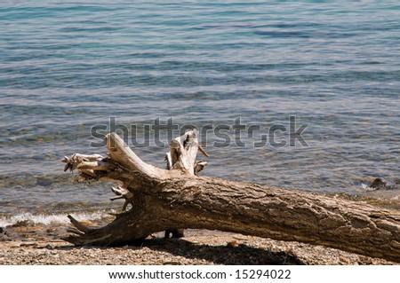 Driftwood log on sandy beach - lake Tahoe, California - stock photo