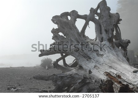 Driftwood on Beach - stock photo