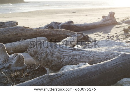 Driftwood on Olympic National Park Beach