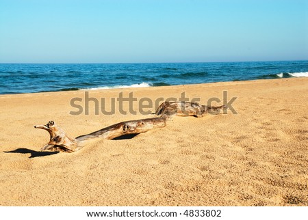 Driftwood on the beach of Lake Michigan, USA in the summertime.