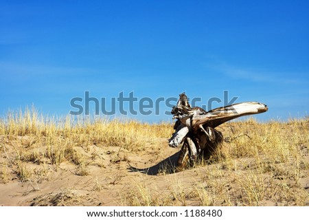 driftwood on the dune - stock photo