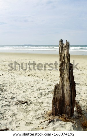 Driftwood stuck in sand at beach - stock photo