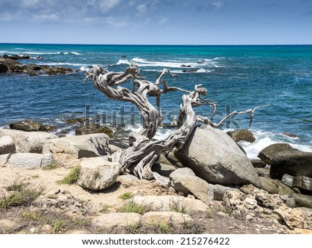 Driftwood - Views around Aruba a small caribbean Island in the Netherland Antilles - stock photo