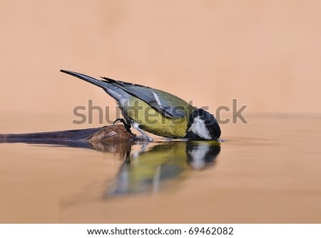 Drinking at the river bird. - stock photo