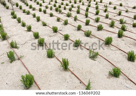drip irrigation on a newly constructed garden - stock photo