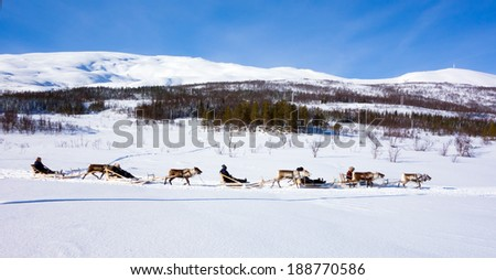 driving on reindeers - stock photo