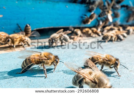 Drone bees