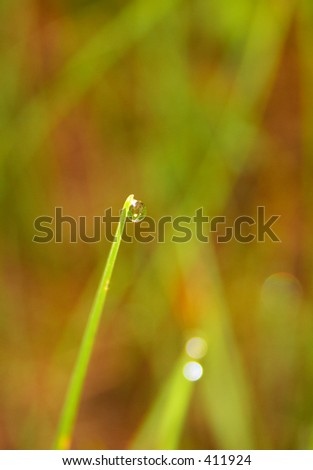 drop and grass - stock photo