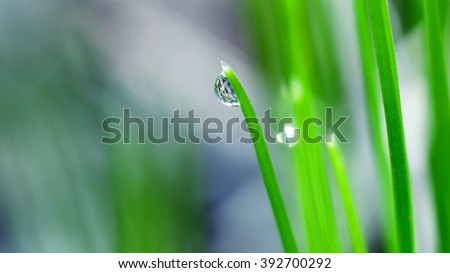 drop dew a green blade of grass - stock photo