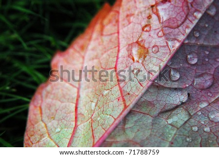 Drop Leaf - stock photo