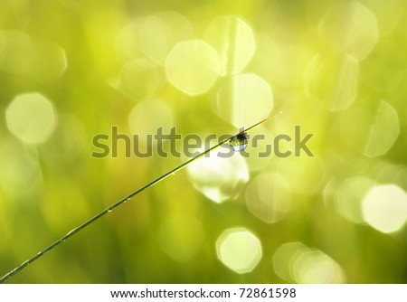 drop of dew on a grass - stock photo