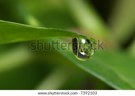 Drop of moisture on a green leaf