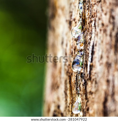 Drop of Resin on Tree Bark - stock photo