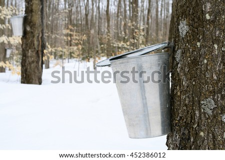 Droplet of maple sap falling into a pail. Maple syrup production. - stock photo