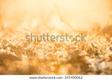 Droplets of dew on the grass glowing in the morning sun - stock photo