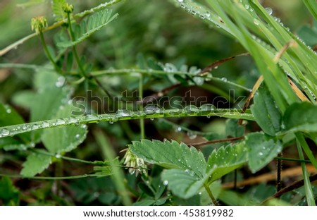 Droplets of water on grass blades in a field during a summer morning - stock photo