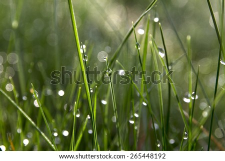drops of dew on grass - stock photo