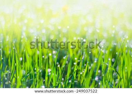 Drops of dew on the grass - Morning mist over the meadow - stock photo