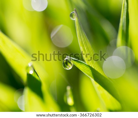 drops of dew on the green grass - stock photo