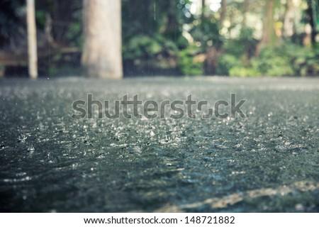 Drops of heavy rain in the tropical jungles - stock photo