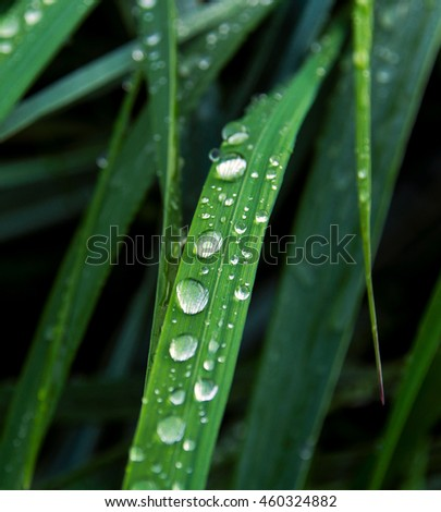 Drops of water on grass after a heavy rain.