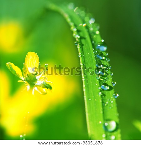 Drops on green grass - stock photo