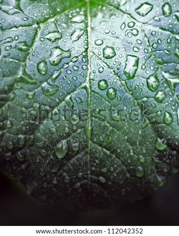 drops on plant - stock photo