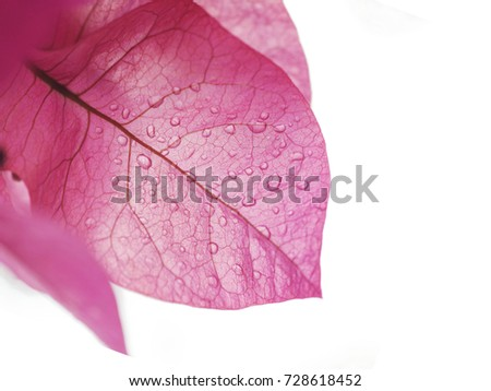 drops on red leaf. background for design. white background