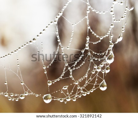 Drops on spider net - stock photo