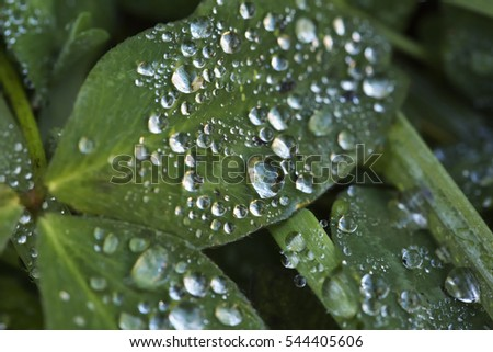 Drops over leaf, close up, horizontal image