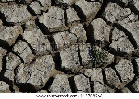 drought - stock photo