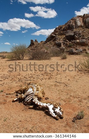 Drought - stock photo