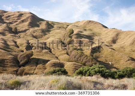 drought stricken denuded coastal hills cleared for sheep and cattle farming, Makorori Beach, Gisborne, New Zealand  - stock photo