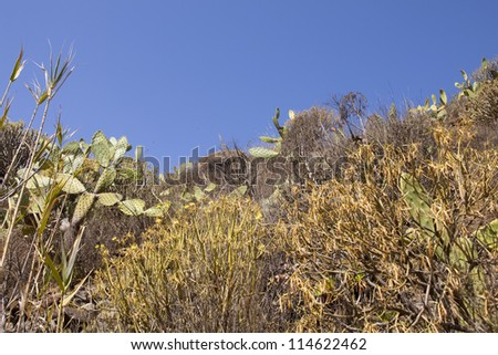 Dry and subtropical landscape with cactus and branches - stock photo