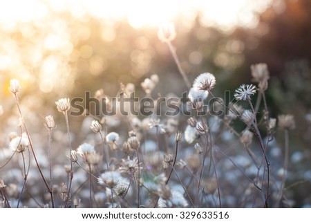 dry autumn flowers on the field in sunset light nature background