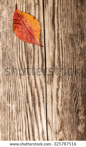 Dry autumn leaf on old plank. Leaf is in upper left corner, rest of plank is empty. Copy space. Selective focus - stock photo