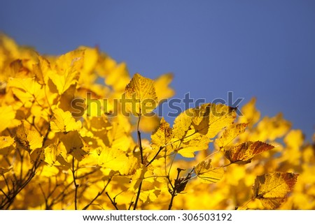 dry autumn leaves in sunny day in forest - stock photo