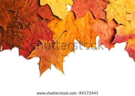 dry autumn leaves isolated - stock photo