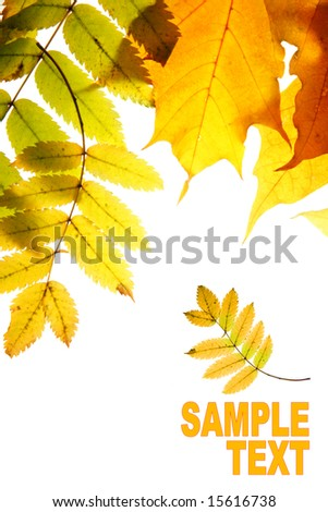 Dry autumn  leaves isolated over whte background with space for your own text - stock photo