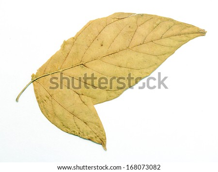 dry autumn leaves on a white background