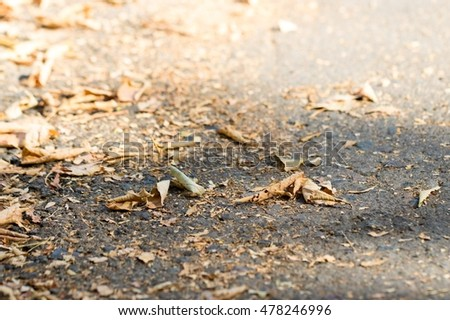 Dry autumn leaves on the sidewalk