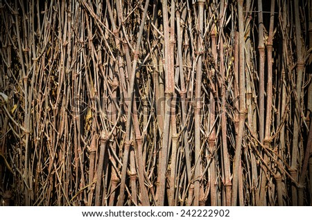 dry bamboo background - stock photo
