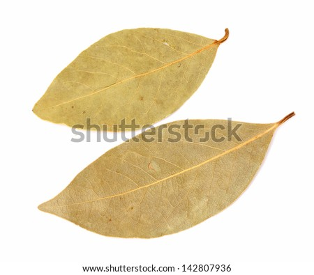 dry bay leaves isolated on white.