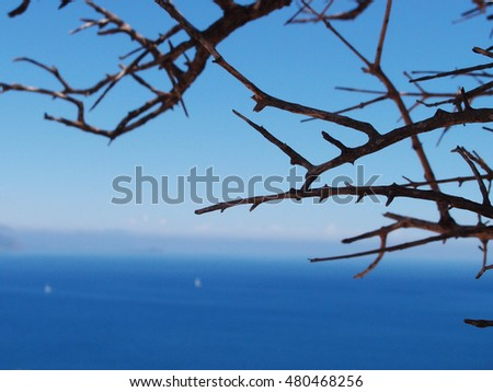 dry branches on the background of the sea
