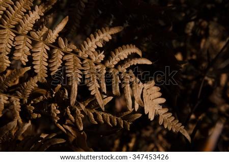 Dry braun  fern leaves - stock photo