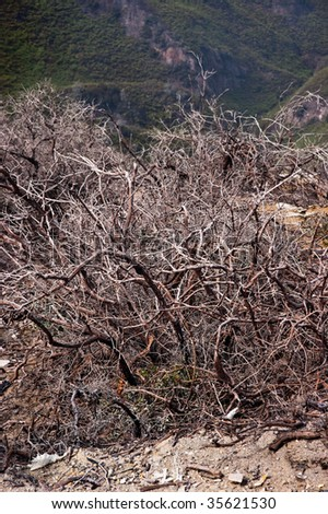Dry brown bush in indonesia active volcano crater